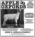 Apple_Oxfords_3-11 Banner Ad