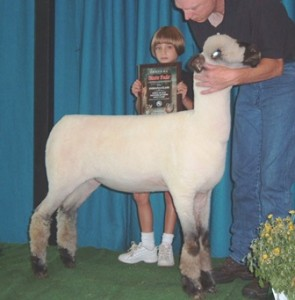 Apple 04-1 1st Place Late Jr. Ewe Lamb