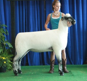 Apple 10-23 Champion Oxford 4-H Ewe