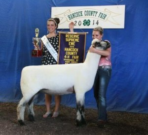 Apple 13-24 Reserve Supreme Champion Ewe