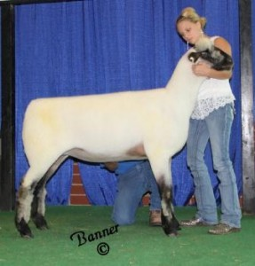 Apple 13-24 Reserve Champion Indiana Ewe