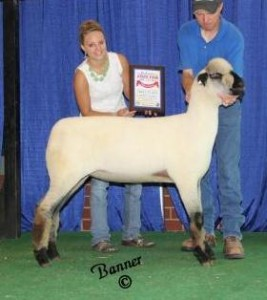Apple 14-9 1st Place Indiana Late Jr. Ewe Lamb