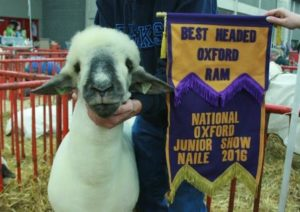 2016 NAILE Jr. Show Best Headed Oxford Ram Apple 16-17