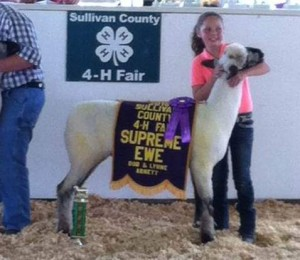 Apple 15-9 sold to Makayla Hitt 2015 Sullivan Co. 4-H Fair Supreme Champion Ewe